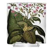 Botany: Tobacco Plant Shower Curtain