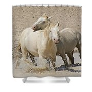 Bother's Love  Shower Curtain by Nicole Markmann Nelson
