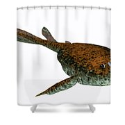 Bothriolepis Fish On White Shower Curtain