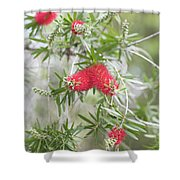 Bottlebrush Shower Curtain
