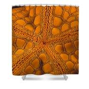 Bottom Of Orange Sea Star Or Starfish Shower Curtain