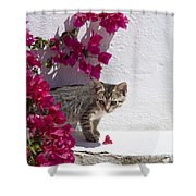 Bougainvillaea Tabby Shower Curtain