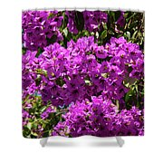 Bougainvillea Blooms Shower Curtain