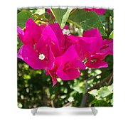Bougainvillea Boogey Shower Curtain