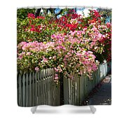 Bougainvillea In Old Eau Gallie Florida Shower Curtain