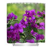 Bougainvillea Morning Shower Curtain