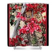 Bougainvillea On Mission Wall - Digital Painting Shower Curtain
