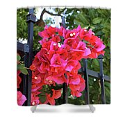 Bougainvillea On Southern Fence Shower Curtain