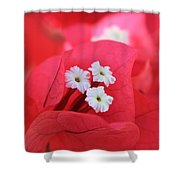 Bougainvilleas And White Shower Curtain
