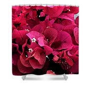 Bougainvillia Shower Curtain