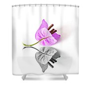 Bouganvillea Reflection Shower Curtain