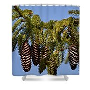 Boughs Of Pine Cones Shower Curtain