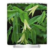 Bountiful Bellwort Shower Curtain