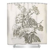 Bouquet Of Different Flowers, Jacques Bailly I, Ca. 1670 , Shower Curtain