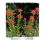 Bouquet Of Paintbrushes Shower Curtain