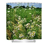 Bouquet Of Wildflowers Along Country Road In Mchenry County Shower Curtain