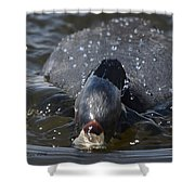 Bow Wave Shower Curtain