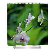 Bowersox Shower Curtain