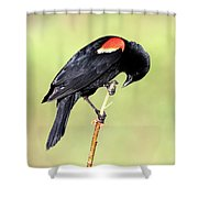 Bowing Shower Curtain