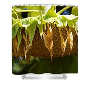 Bowing Sunflower Shower Curtain