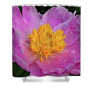 Bowl Of Beauty Peony Catching The Rain Shower Curtain