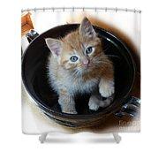 Bowlful Of Kitten Shower Curtain