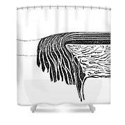 Bowmans Membrane, Retinal Layers, 1842 Shower Curtain