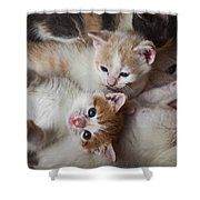 Box Full Of Kittens Shower Curtain by Garry Gay