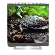 Box Turtle Shower Curtain