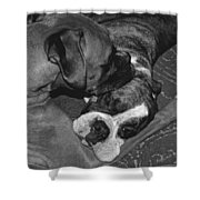 Boxer Buddies Shower Curtain