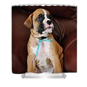 Boxer Pride Shower Curtain