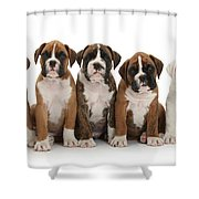 Boxer Puppies Shower Curtain by Mark Taylor