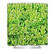 Boxwood Leaves Shower Curtain