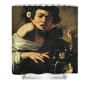 Boy Bitten By A Lizard, 1596 To 97 Shower Curtain