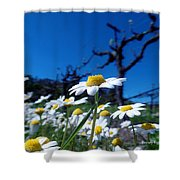 Br0078 Shower Curtain
