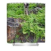 Bracken Fern Meadow Shower Curtain