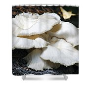 Bracket Fungus Shower Curtain