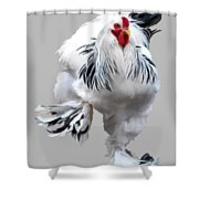 Brahma Breeders Rock Red Shower Curtain