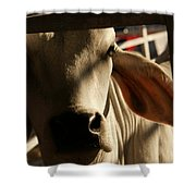 Brahma Love Shower Curtain