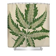 Brake Fern Shower Curtain