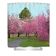 Branch Brook Cherry Blossoms II Shower Curtain