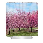 Branch Brook Cherry Blossoms Shower Curtain