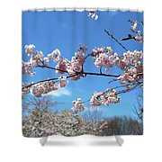 Branch Of Blossoms Shower Curtain