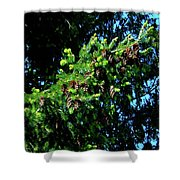 Branch Of Cones Shower Curtain