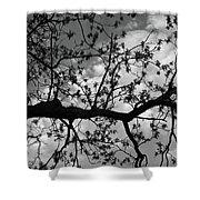 Branch Patterns Shower Curtain