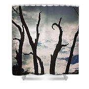 Branch Silouettes On Skeleton Beach Shower Curtain