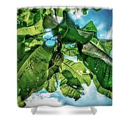 Branch With Green Fruit Shower Curtain