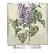 Branch With Purple Lilacs, Maria Geertruyd Barbiers-snabilie, 1786 - 1838 Shower Curtain