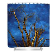 Branches Against Night Sky H Shower Curtain