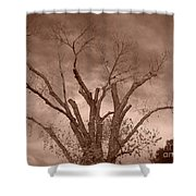 Branches Against Sepia Sky H   Shower Curtain